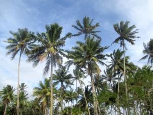 Reise nach Fidschi